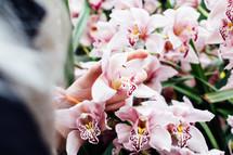 picking irises