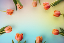 Spring tulips on a rainbow colored background