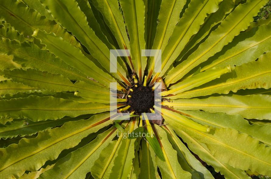 closeup of a plant