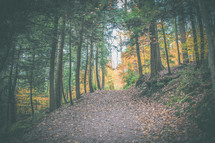 fall leaves on a path through a forest