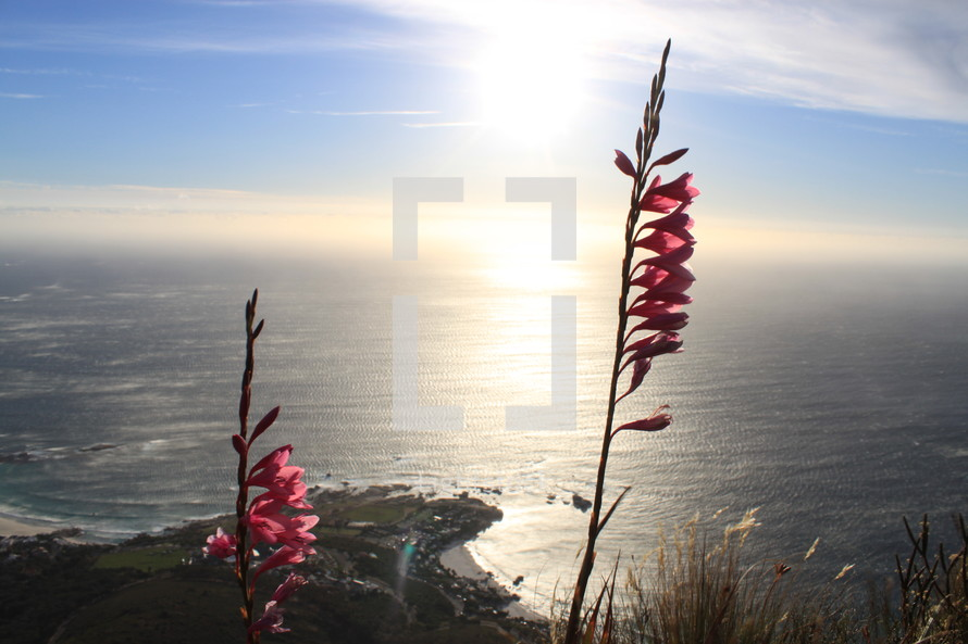 pink flowers in front of an ocean view