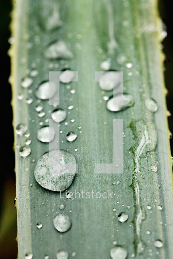 Waterdrops on a blade of grass
