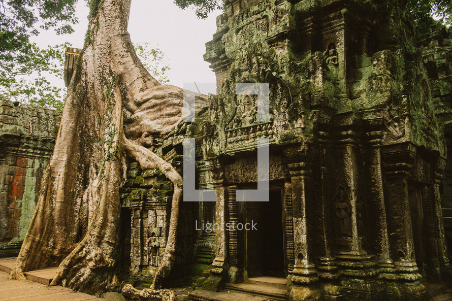 tree roots on a temple in ruins in Cambodia