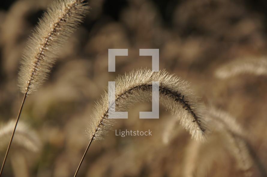 Grass. Autumn, fall, brown, season