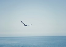 seagull in flight over the ocean