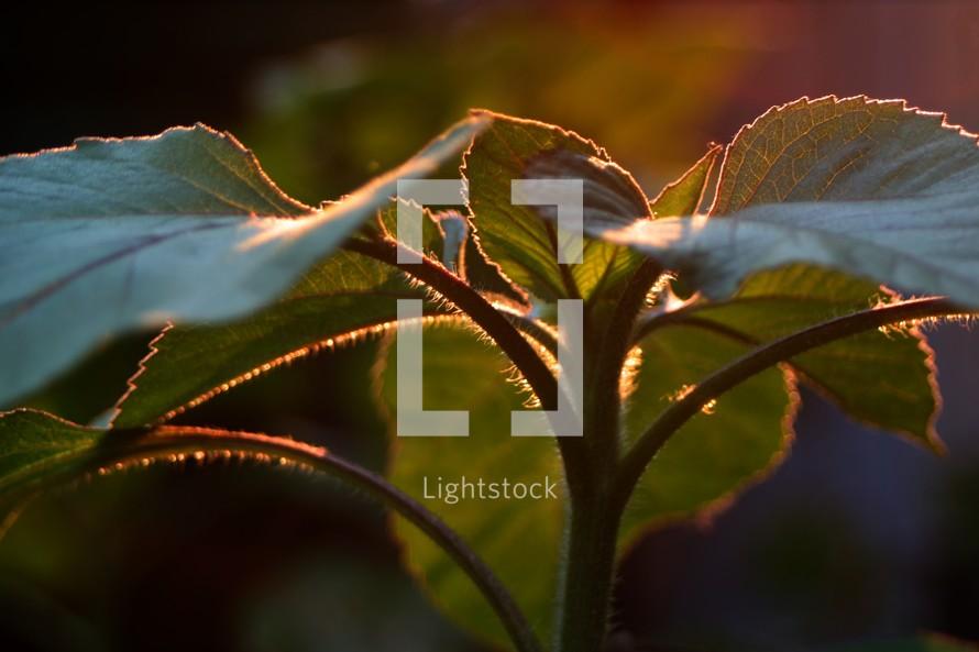 Backlit garden plant