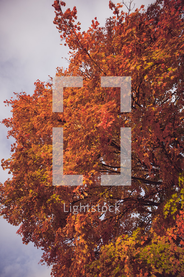 orange and red on a fall tree