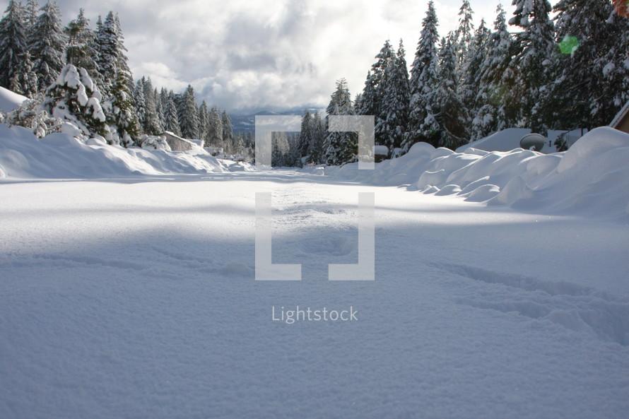 snow drifts in an alpine forest