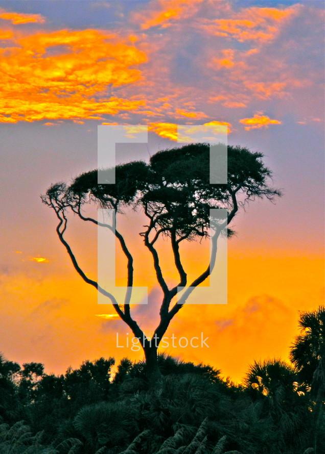tree against sunset sky