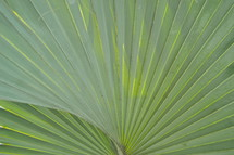 Palm tree branches leaves or fronds
