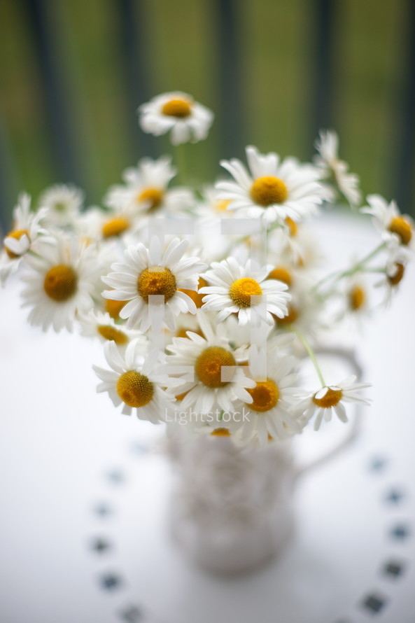 Daisies to brighten up the day.