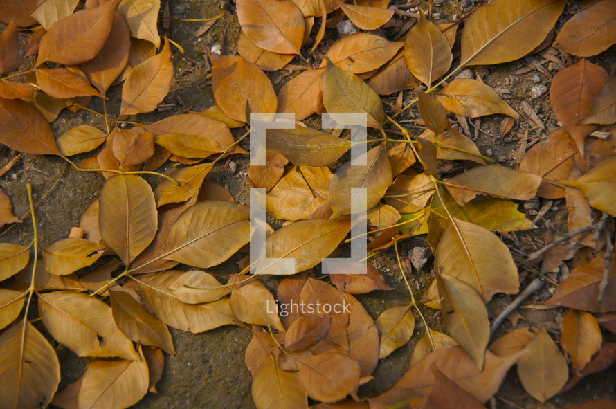 Fall leaves on the forest floor