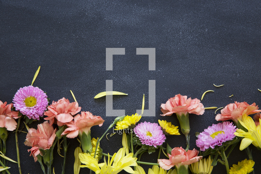 border of flowers on a black background