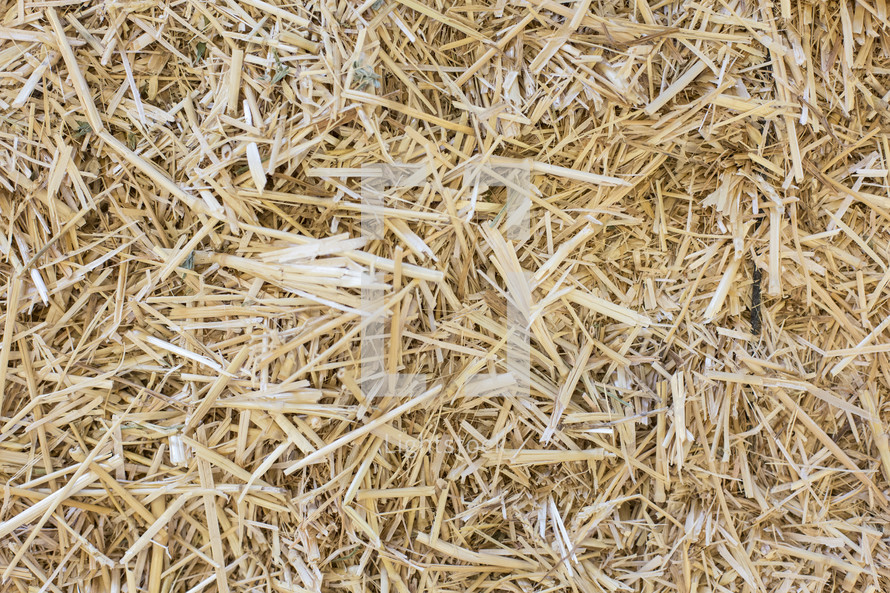 Yellow hay grass