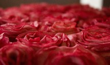 tops of red roses in a bouquet
