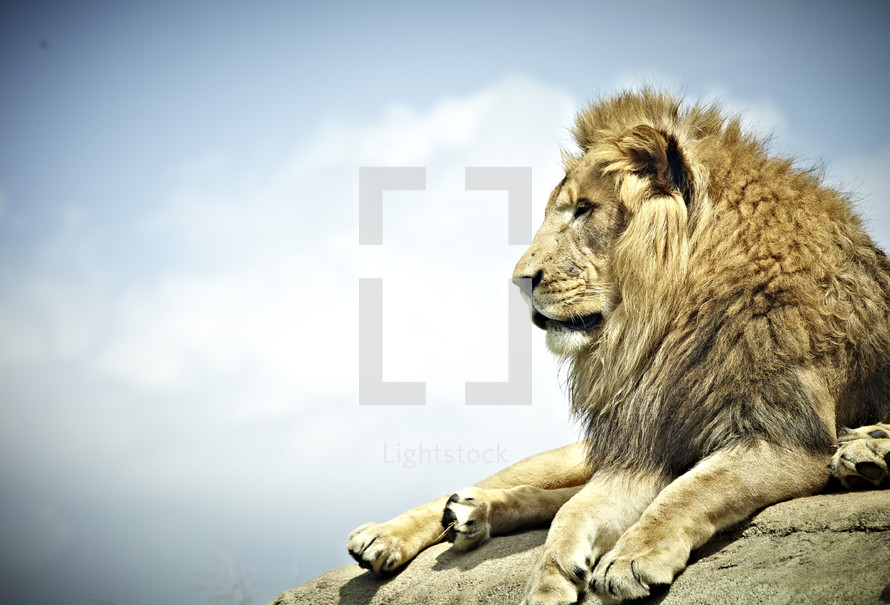 A lion rests on a large rock.