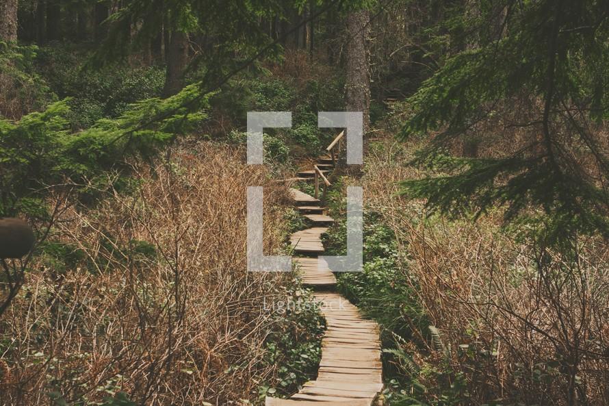 wood hiking trail