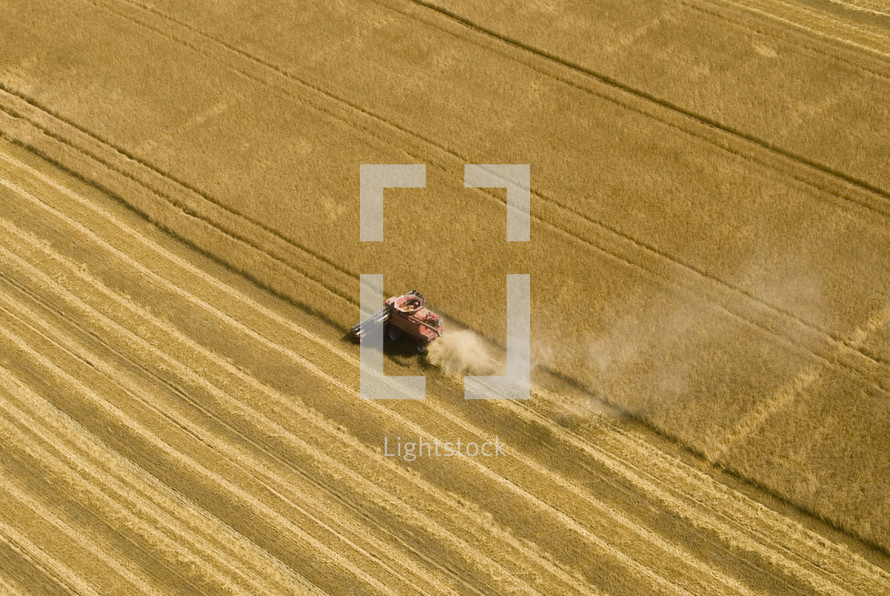 Combine harvester harvesting a wheat field