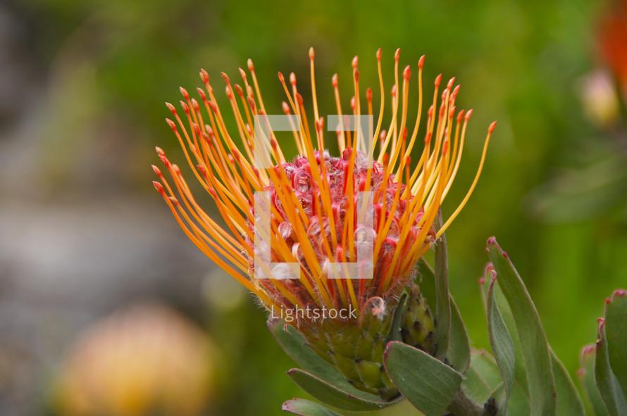 A close-up of a flower