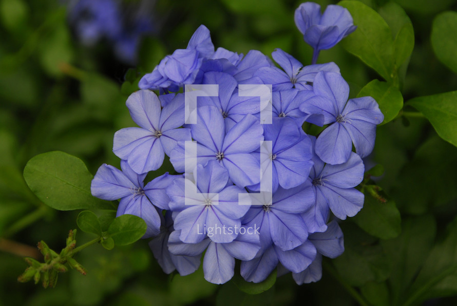 Blue /Purple flowers