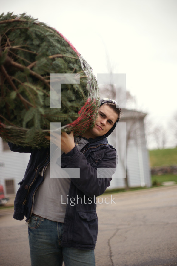 Carrying a fresh cut Christmas Tree