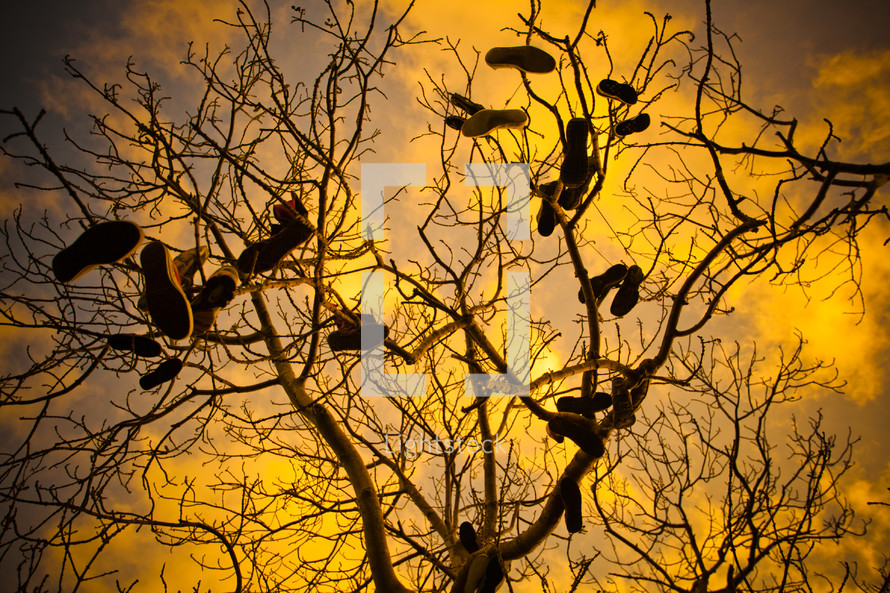 Shoes hanging from a leafless tree.