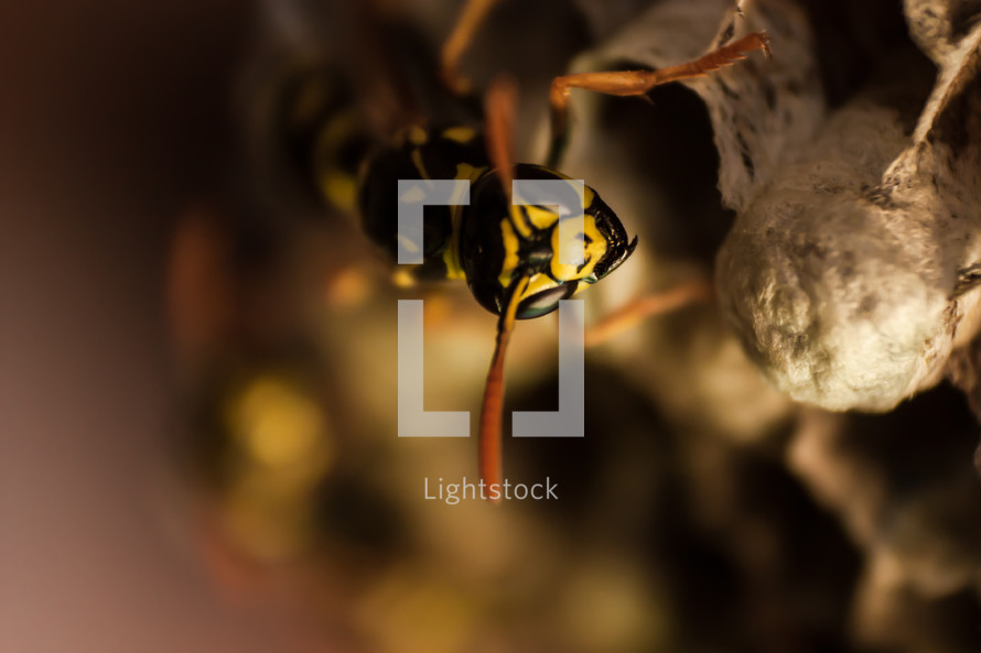 A wasp crawling on a hive