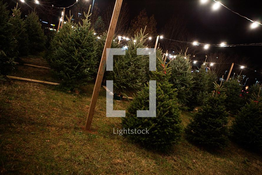 Lights over a christmas tree lot — Photo by Keoni K - Lightstock