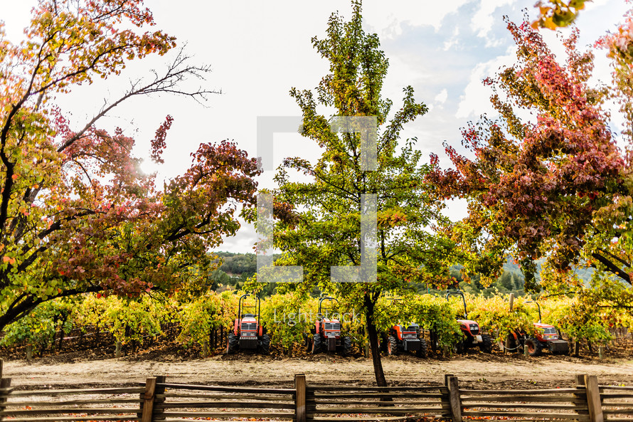 Four orange tractors sitting in vineyard beghind trees and wooden fence fall harvest napa valley California