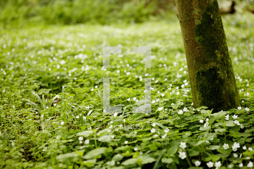green foliage on a forest floor