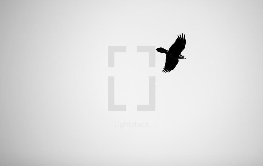 A bird flies in the sky.
