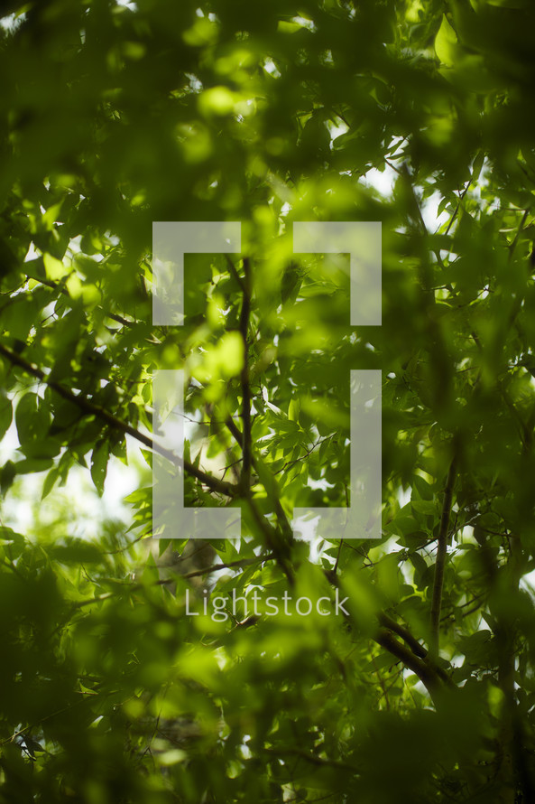 Looking through green leaves and branches