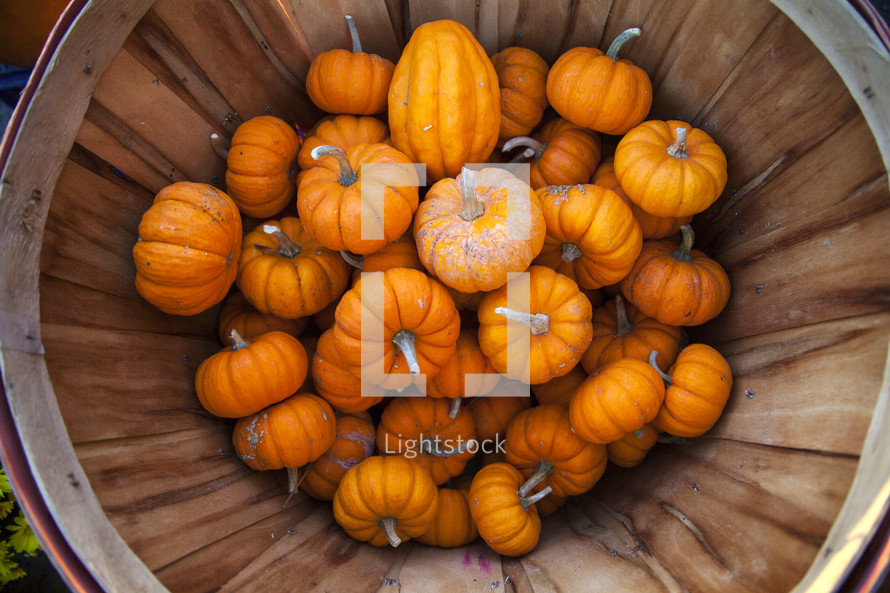 Basket filled with small pumkins.