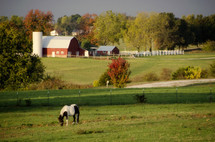 A horse in a field with a barn.