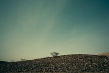 Trees growing on a rocky hillside.