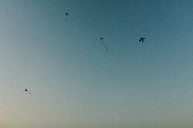silhouettes of kites in a sky