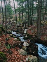 stream through a forest
