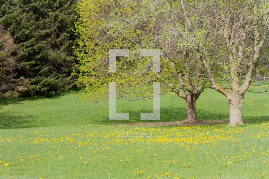 meadow of spring flowers