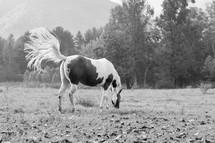 a horse in a pasture