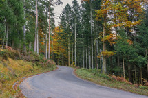 road through black forest in autumn