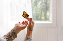 touching a butterfly