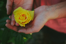 yellow rose in the palm of a woman's hand