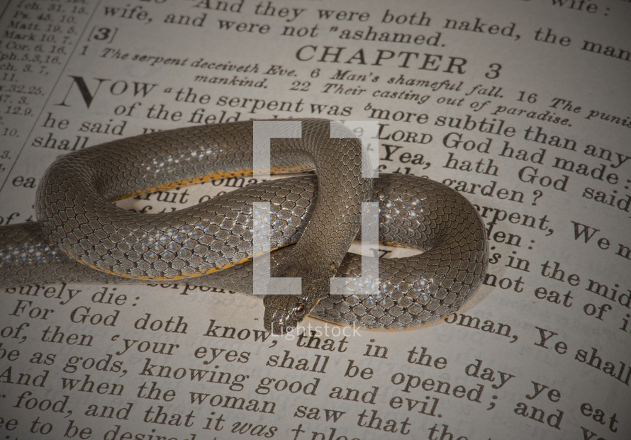 snake on the pages of a Bible