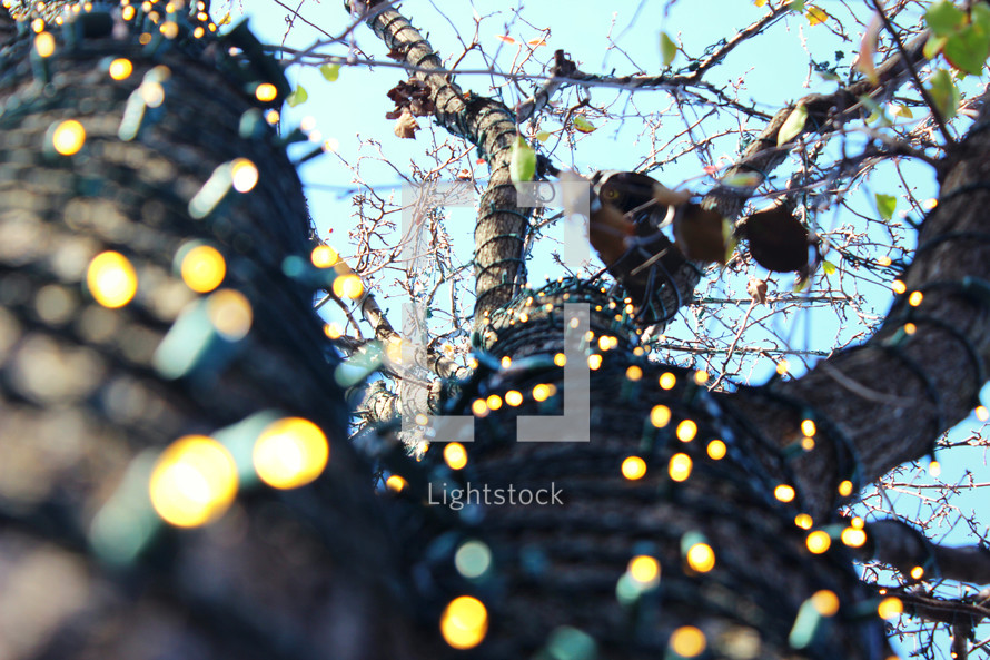 Christmas lights wrapped around a tree