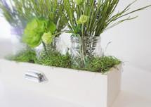 spring greens in planter