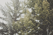 abstract style with out of focus capture of snow falling by trees