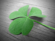 green 3 leaf clover with a wood background