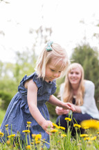 a little girl picking dandelions with mom