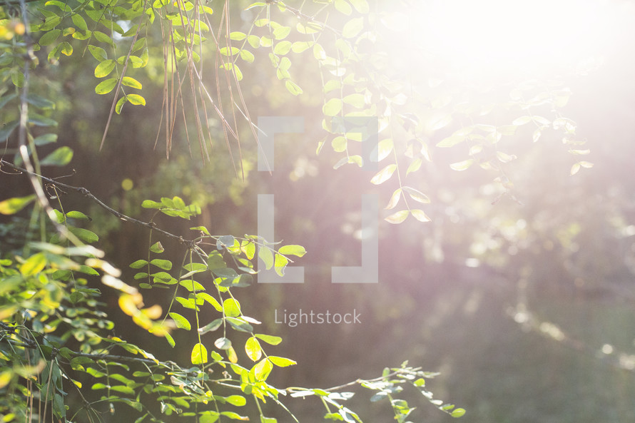 bright sunlight over green leaves
