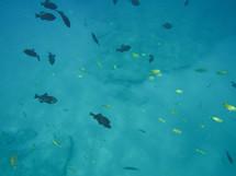 tropical fish in Hawaii